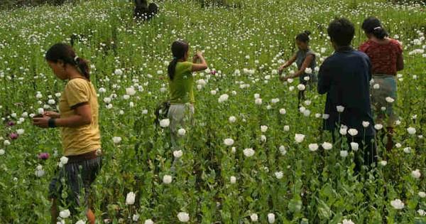 अरुणाचल प्रदेश के लिए अफीम, चीन से बड़ा खतरा है