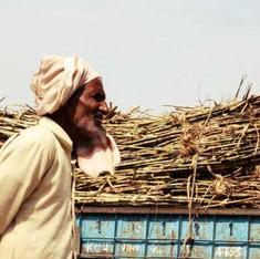 क्यों उत्तर प्रदेश के 'किसान वर्ष' में गन्ना किसान शामिल नहीं हैं